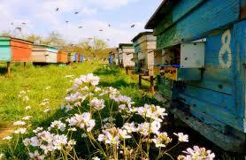 До уваги пасічників та аграріїв України