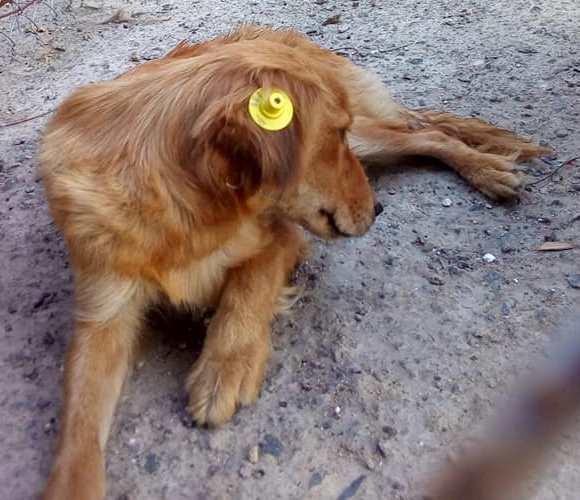 У Шполі стерилізували 43 собаки